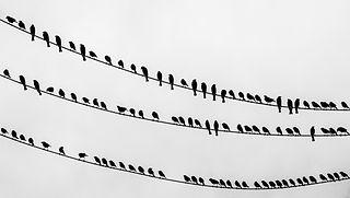 Lintuja langoilla