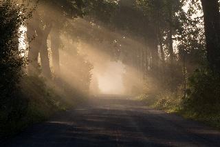 Sumuisen aamun auringonnousu Dülmenin lähettyvillä (Saksa)