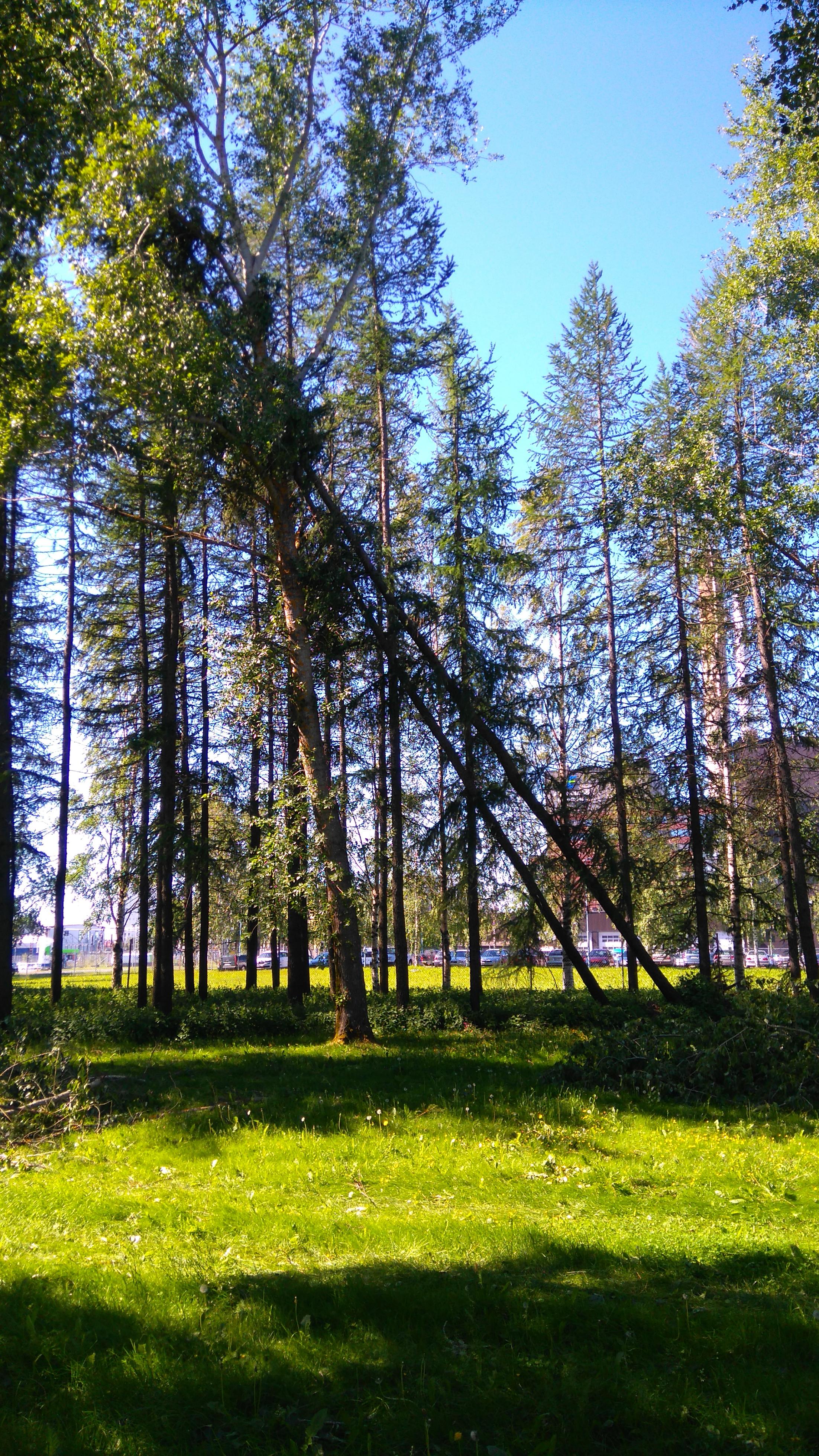 Kaksi puuta nojallaan kolmatta vasten